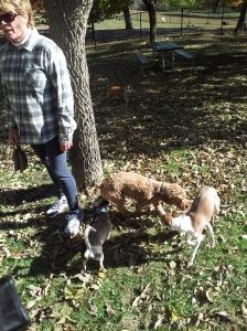 Seamus Dog Park