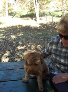 Seamus Mom Dog PArk